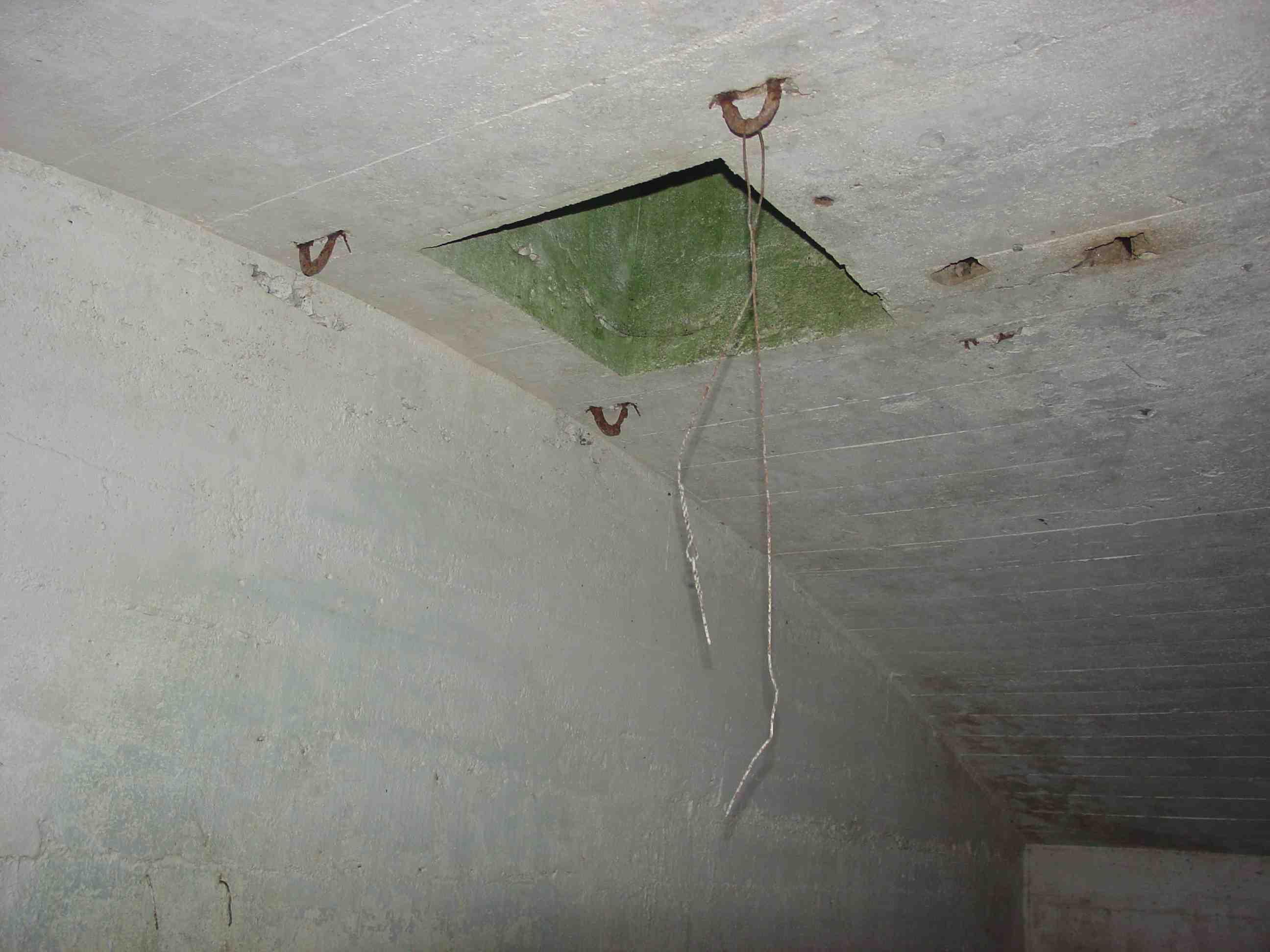 Root Cellar Maudslay L